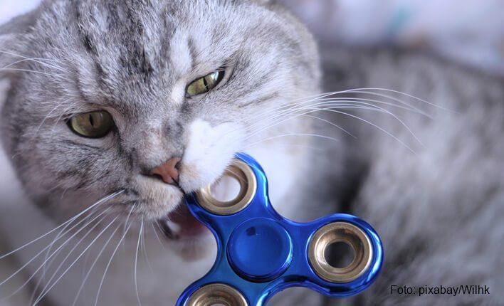 Katze beißt in Holz und Plastik