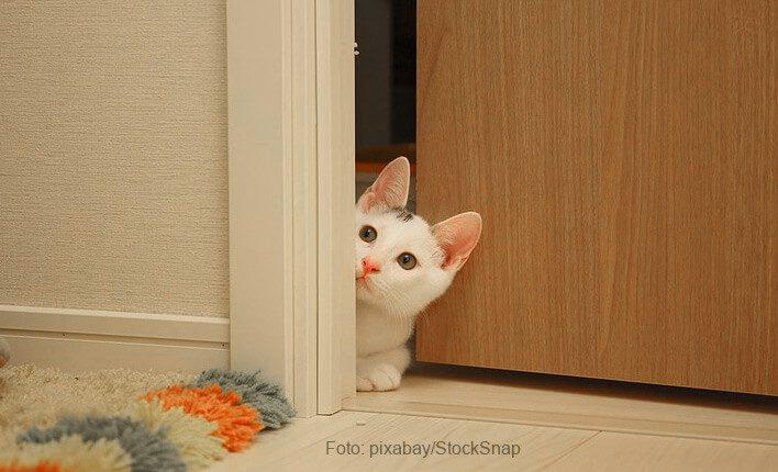 Katze kratzt an Tür