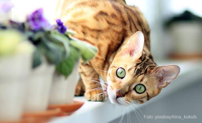 Katze kratzt an ihrer Lieblingsstelle