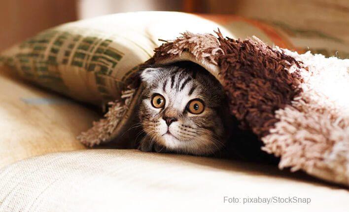 Katze pinkelt auf Couch