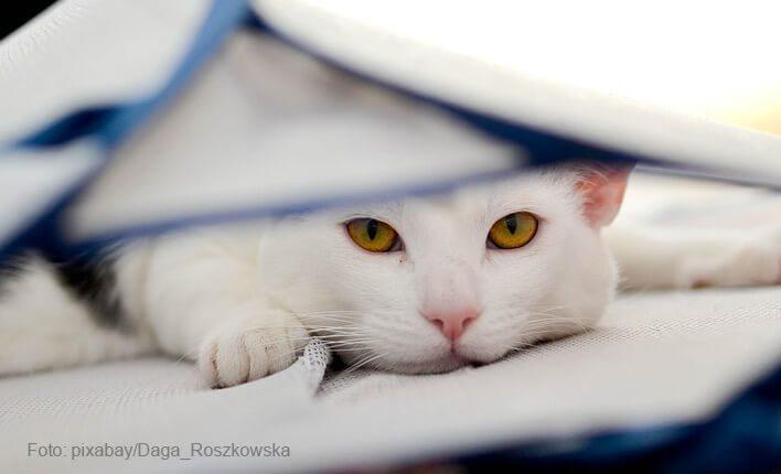 Katze pinkelt wegen einer Erkrankung