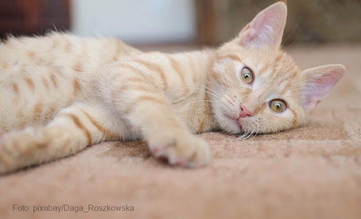 Katze pinkelt durch emotionale Probleme