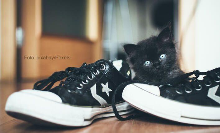 Katzen die in Schuhe pinkeln