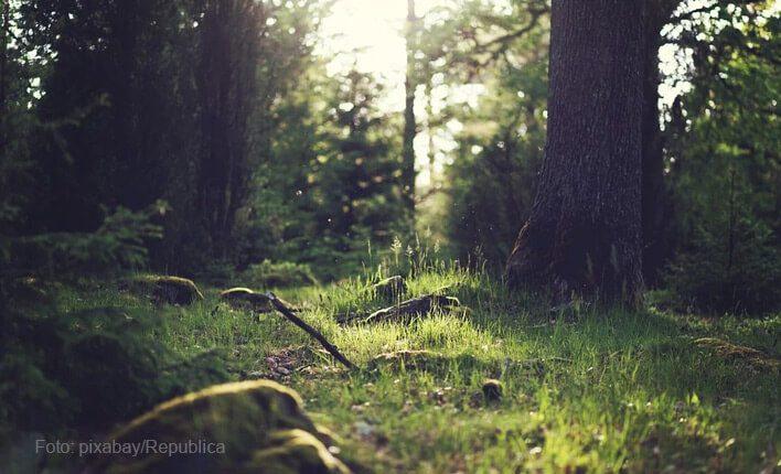 Geeignetes Holz für Naturkratzbaum