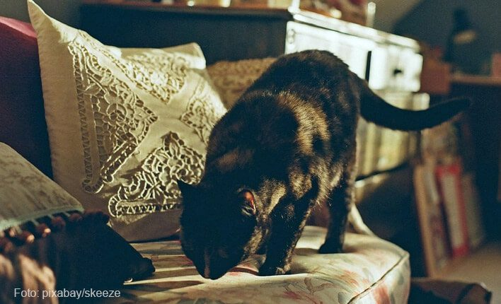 Katze kratzt an Sofa
