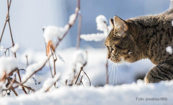 Katze zittert durch Kälte