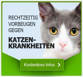 Tipps zu Katzenkrankheiten
