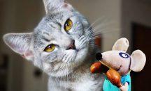 Empfehlungen für Katzenspielzeug