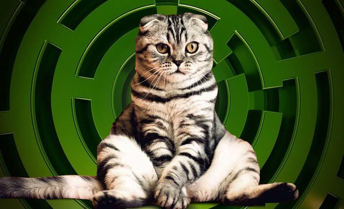 Futterlabyrinth für Katzen