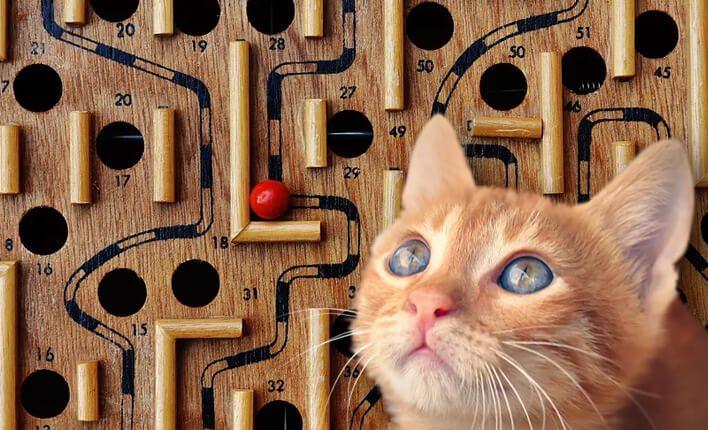 Katzenspielzeug Intelligenzsspielzeug für Katzen
