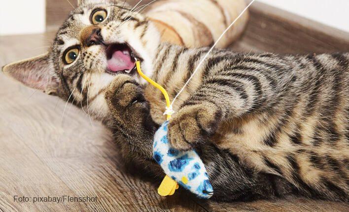 Katzenangel als Katzenspielzeug