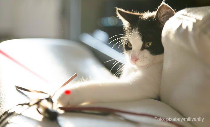 LED und Laserpointer für Katzen