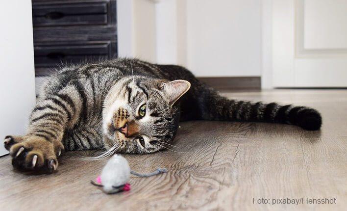 Katzenspiele die mit Katzenkräuter gefüllt sind