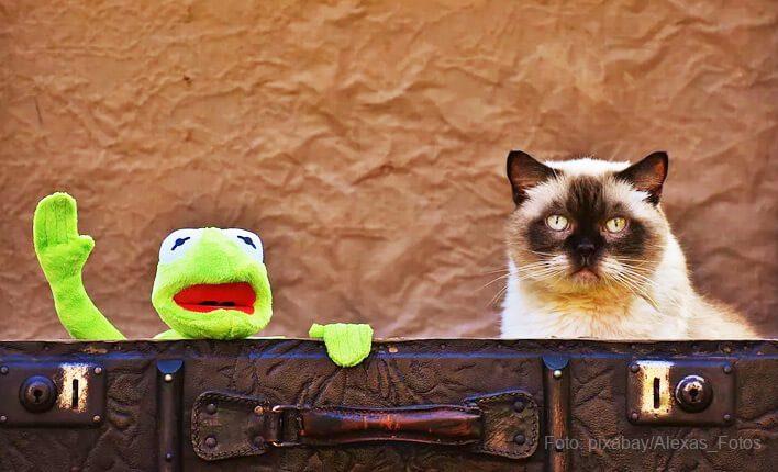 Stofftier für Katzen