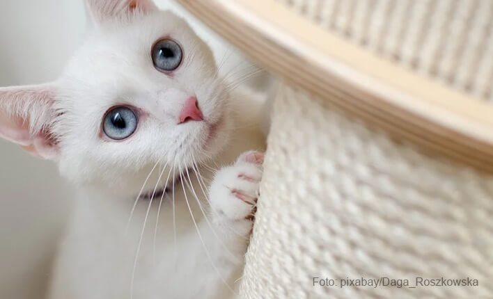 Kratzschutz Alternativen für Katzen