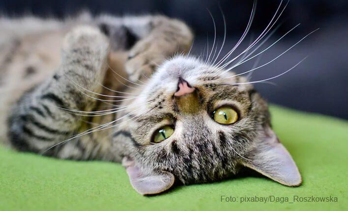 Kratzschutz für Katzen attraktiv machen