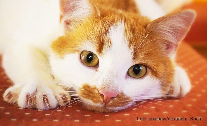 Kratzschutz für Katzen Hilfsmittel