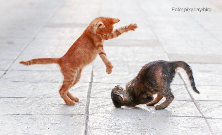 Lebhafte Katzen zügeln
