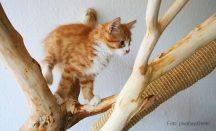 Naturkratzbaum Empfehlungen