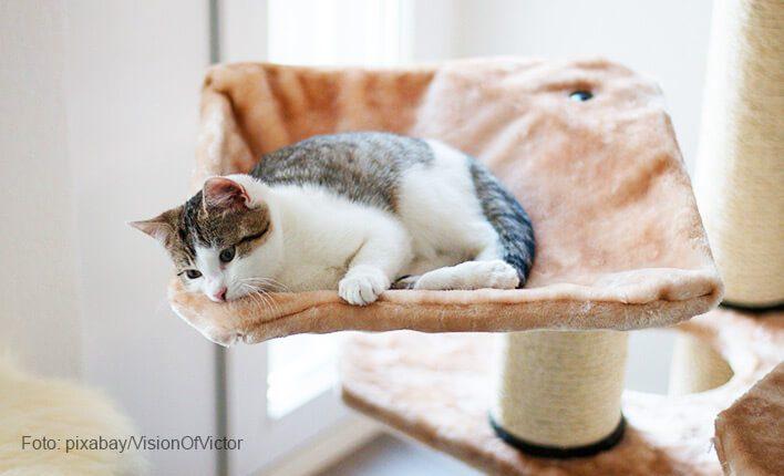 Katze kratzt nicht mher vor Entspannung