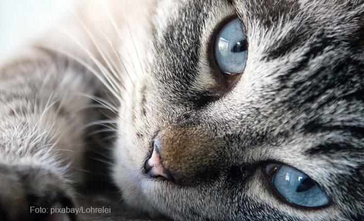 Zittern durch Epilepsie bei Katzen