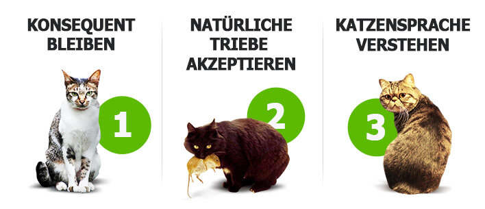 Die 3 Kernbereiche der Katzenerziehung