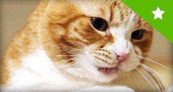 Hilfe gegen Katzenzittern