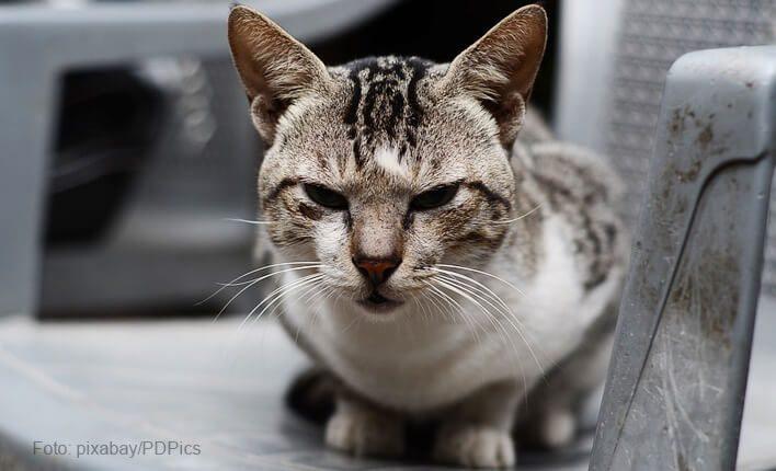 Blutgerinnungsstörung bei Katzen