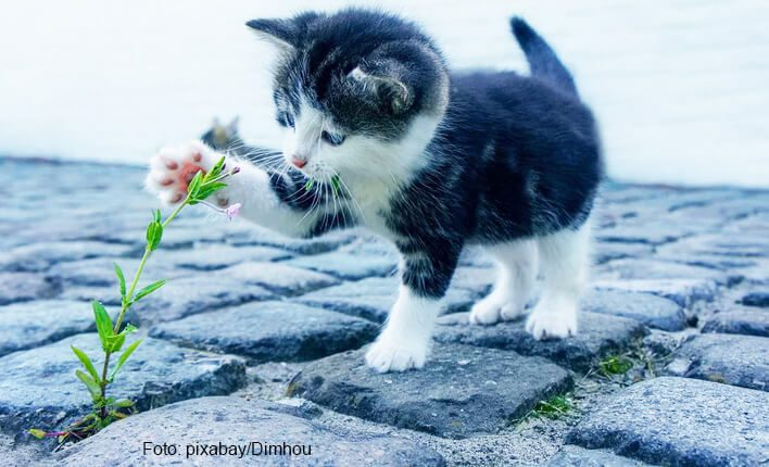 Katze frisst Giftpflanze