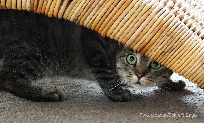 Katze hechelt und hat Angst