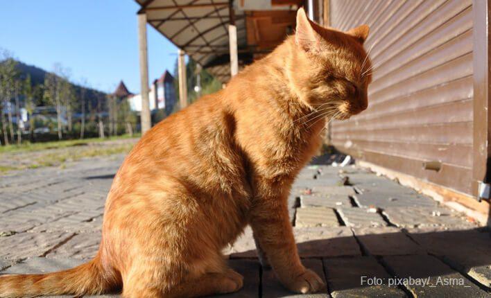 Katze hat Hitzschlag