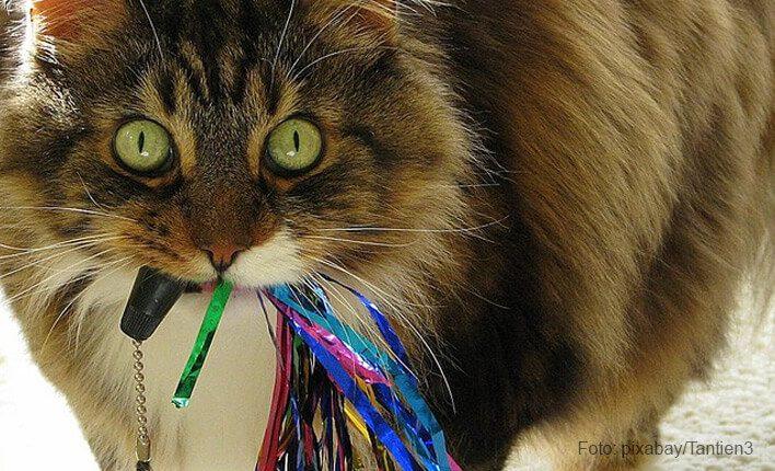 Katze verschluckt Fremdkörper