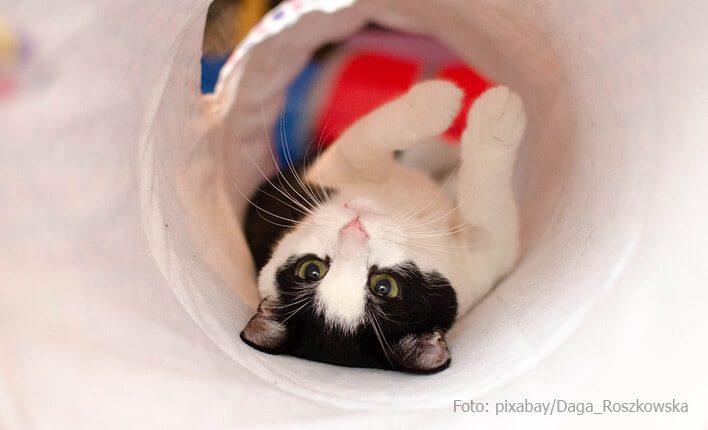 Katzentunnel als Spielzeug für Katzen