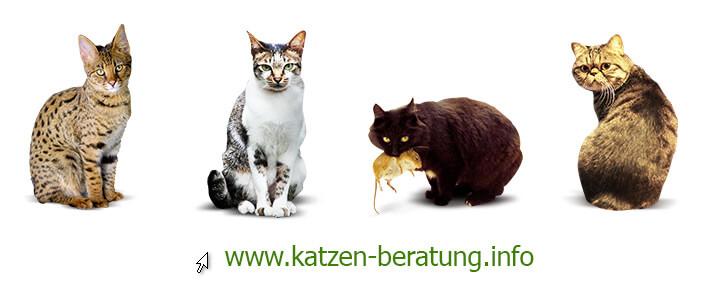 Verschiedene Katzentypen