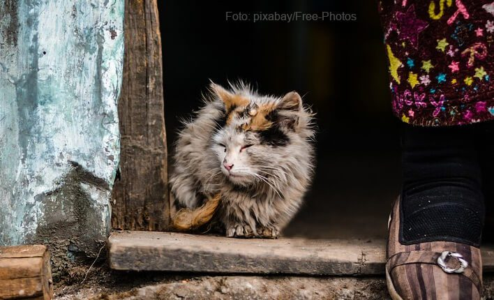 Zittern durch hohes Katzenalter