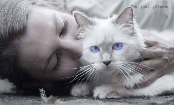 Ansteckung durch Giardien bei Katzen