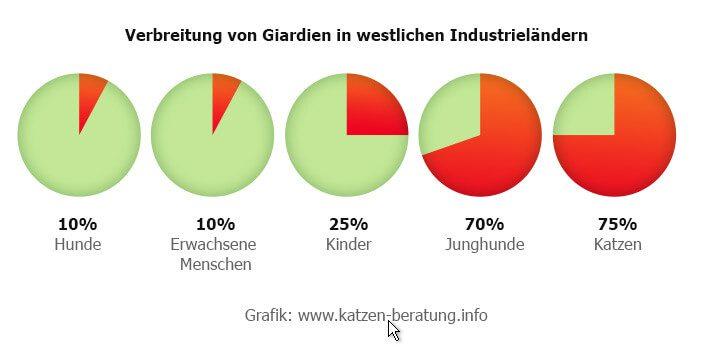 Verbreitung von Giardien in Prozent
