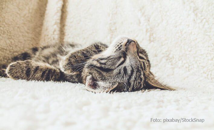 Tod durch Giardien bei Katzen