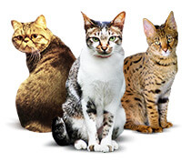 Katzenforum und Beratung