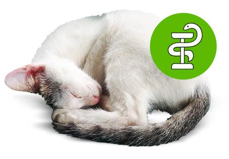 Katzenkrankheiten erkennen