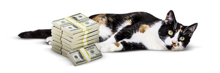 Kosten für Katzenhalter
