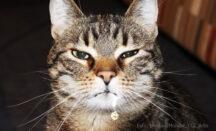 Katze speichelt und sabbert