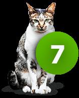 7 Möglichkeiten warum deine Katze sabbert