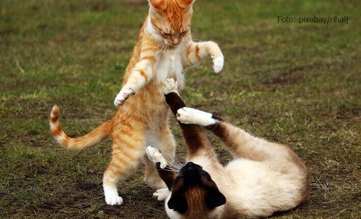 Ansteckung mit Katzenschnupfen