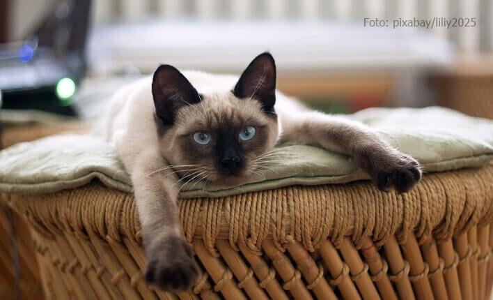 Katze mit Nervenkrankheit