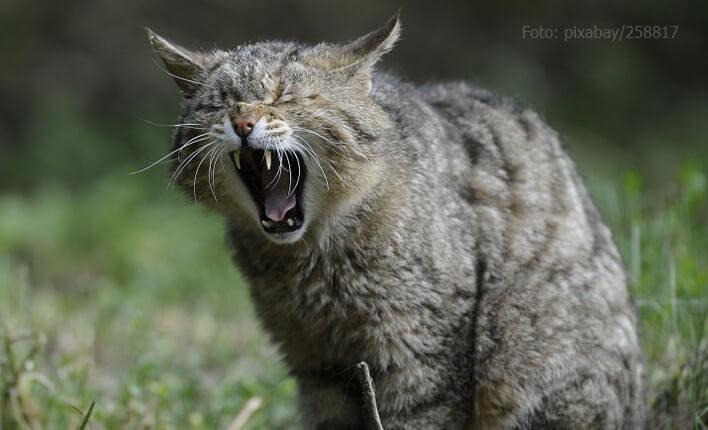 Katze sabbert wegen Übelkeit