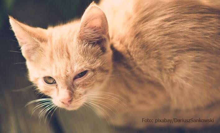 Symptome bei Katzenschnupfenq