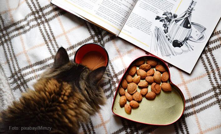 Faktoren für gesunde Katzenleckerlies