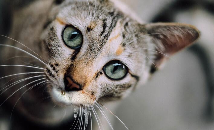 Katze spuckt Schleim